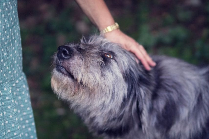How an Emotional Support Dog Can Help In Social Anxiety Disorder Treatment and Beyond
