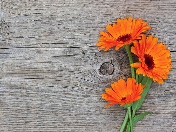 testimonial-flower-pic-1