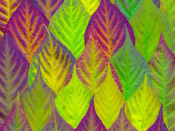 testimonial-leaf-pic-1